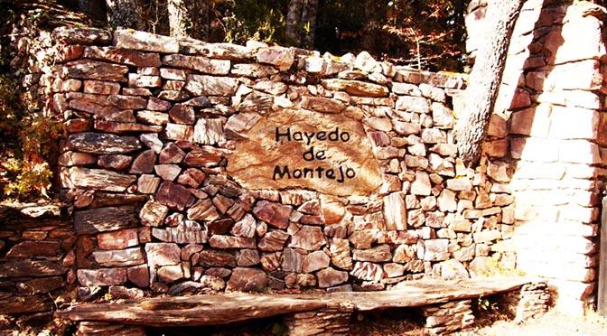 Uno de los hayedos más importantes de España, el Hayedo de Montejo.
