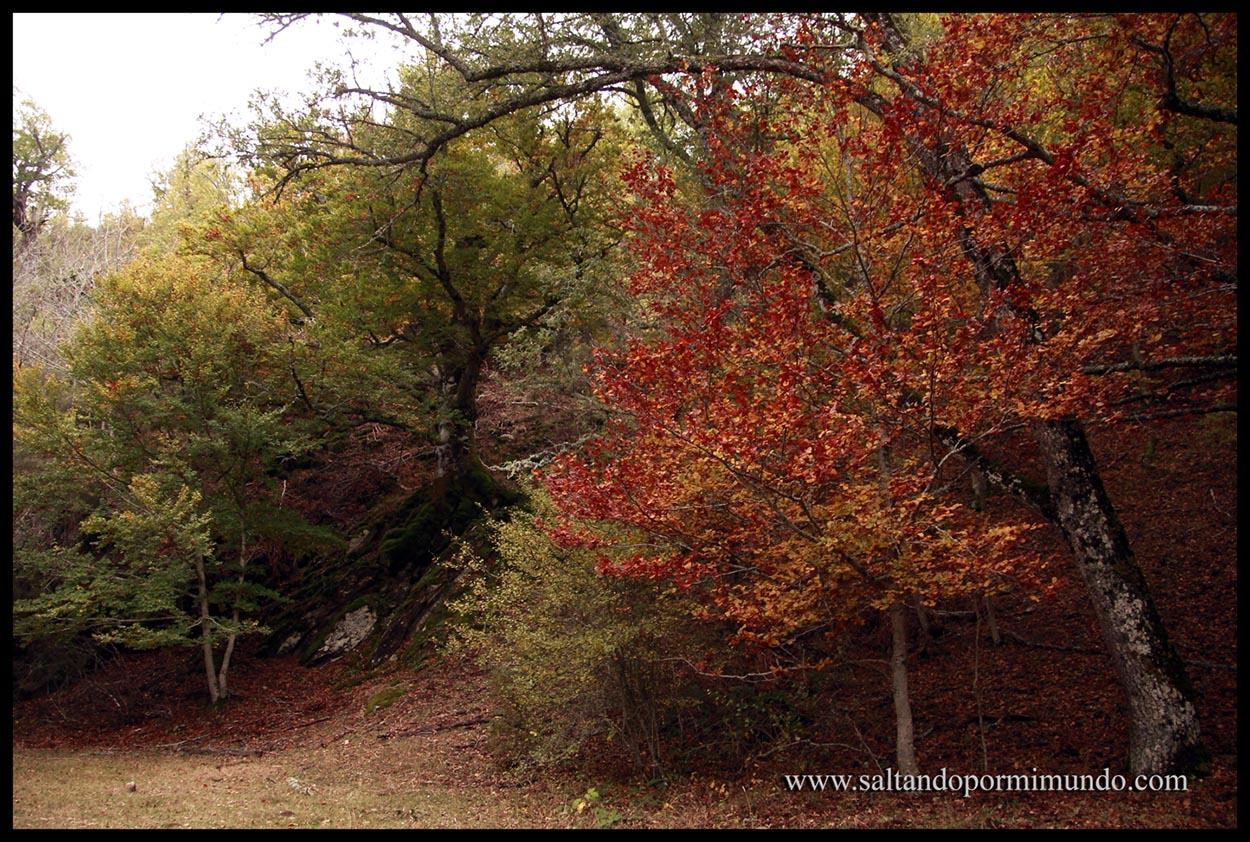 Uno de los Hayedos más importantes de España, el Hayedo de Montejo, en la Sierra del Rincón.