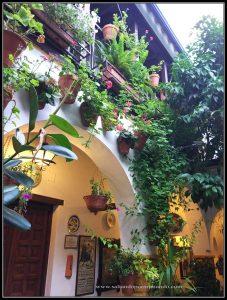 Visitando los Patios de Córdoba, Patio Calle Ocaña